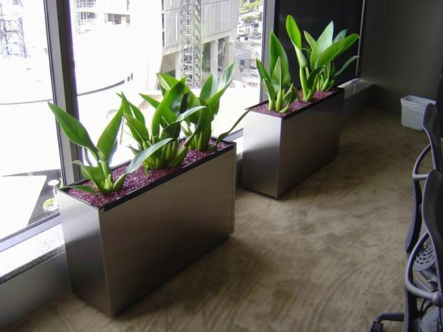 Large Indoor Plant Pots Melbourne Indoor Planters Melbourne