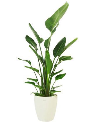 Indoor Plant Choices | Indoor Plant Choices Melbourne