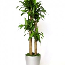 Happy Plant