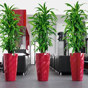 office pot plants. diamante office pot plants t