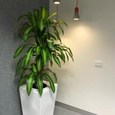 Happy Plant In Premium Wedge