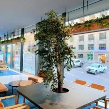 Lobby Plants in Custom Joinery