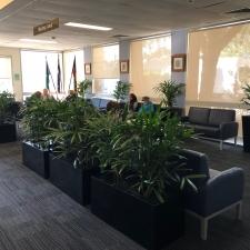 Alfred Hospital Foyer Plant Arrangement