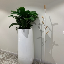 Peace Lillies in Large Urns