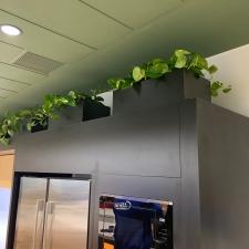 Devil's Ivy in Partition Troughs