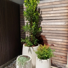 Cluster of Outdoor Planters