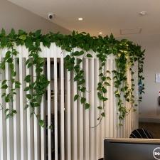 Devil's Ivy in Custom Joinery Unit