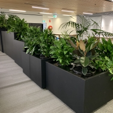 Various Plants in Tambour Units
