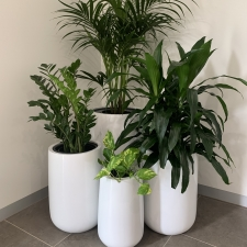 Cluster of Urn Plants in Office