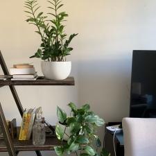 Devil's Ivy and Zanzibar Gem on Shelf