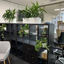 Plants in Shelving Unit