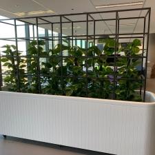 Devil's Ivy in Custom Made Frame