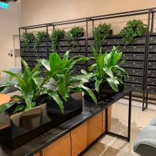 Partition Troughs and Devil's Ivy in Boat Planters