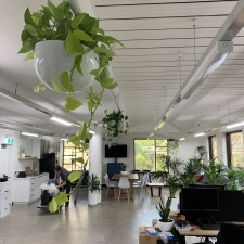 Hanging Planters in Office