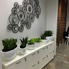 Mix of Plants in Boat and Desktop Planters