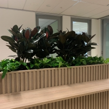 Rubber Plant & Devil's Ivy Joinery