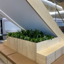 Dracaena Janet Craig and Devil's Ivy in Custom Joinery