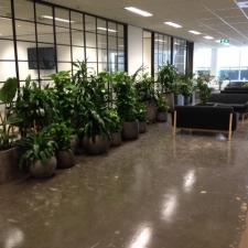 Tropical Plant Arrangement