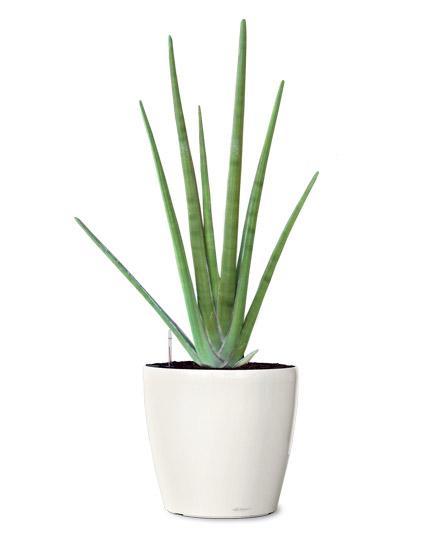 Indoor Plant Choices Indoor Plant Choices Melbourne