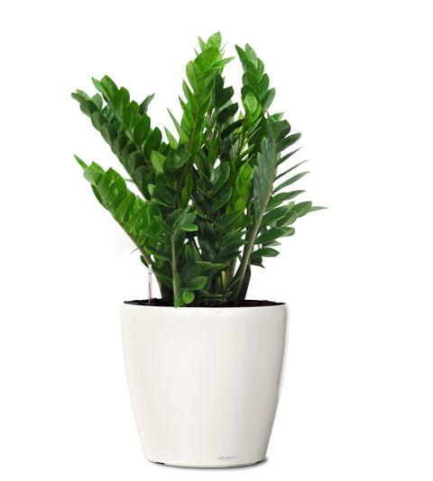 Indoor plants hire melbourne office plant hire melbourne - Interior plant maintenance contract ...