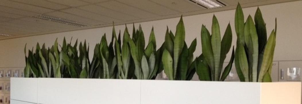 Planters Melbourne