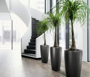 Indoor Plant Hire