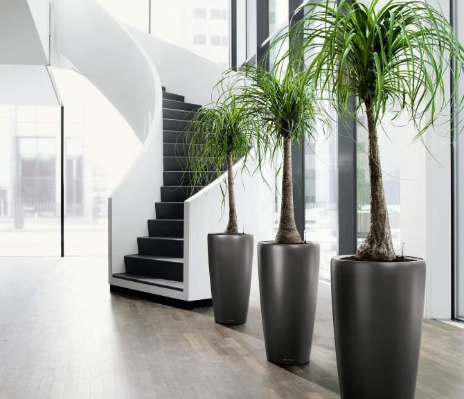 office pot plants. Beautiful Office Throughout Office Pot Plants T