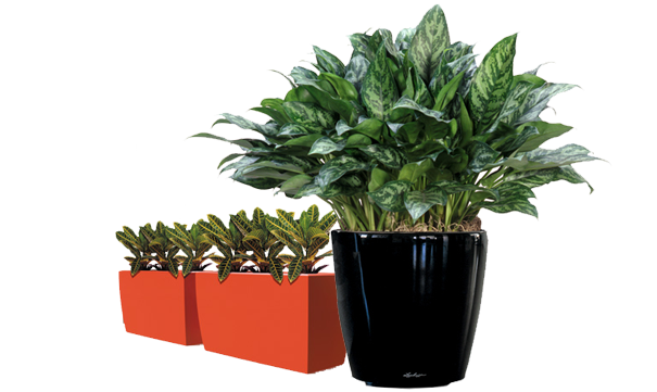 indoor plants hire melbourne office plant hire melbourne