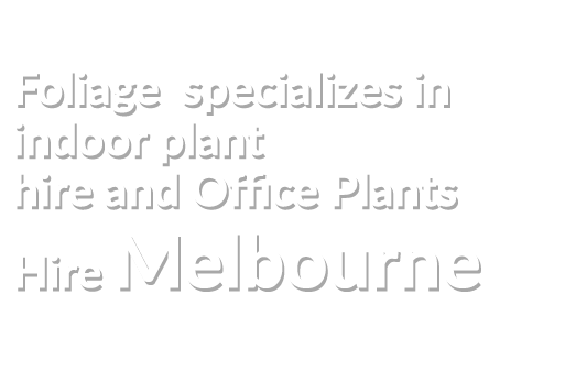 Indoor And Office Plants  Hire Melbourne